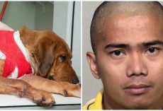 Dog Is Fighting For His Life After He Was Stabbed & Left For Dead By His Owner
