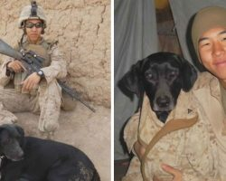 Marine Spent 6 Years Locating K-9 That Saved Him From IED To Bring Her Home