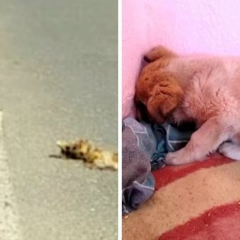 Puppy Found Next To Corpse Of His Dead Mother, Pushes Face Into Wall & Shuts Off