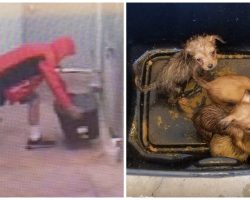 Guy Dumps Puppies In Sealed Container At Shelter, Police Need Help Finding Him
