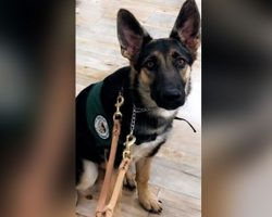 $5000 Reward Being Offered For Safe Return of Missing Seeing Eye Puppy's Return