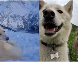 Heroic Husky Rescues An Injured Deaf Hiker Who Fell 700 Feet Down A Mountain