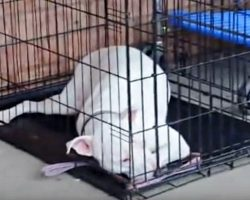Deaf Dog Can't Hear Soldier Dad Coming After Being Apart For Way Too Long