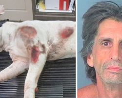 Man Ties Pit Bull Behind Truck & Drives Fast, Dragging Him Along Till He's Bloody