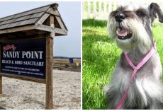 Police Called To Flames At Beach Find Dog Doused With Accelerant, Lit On Fire