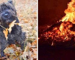 Abusers Chase Dog With Fireworks, Mercilessly Set Him On Fire & Burn Him Alive