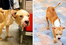 Owner Starves Dog For Months, Then Dumps Him At Shelter Doorstep And Takes Off