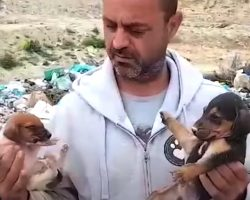 Man Finds 500 Strays, Gives Up His Job And Sells Everything To Care For Them