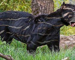 10 Rarest Dog Breeds in the World