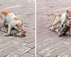 Cat Drags Friend's Lifeless Body To Nearby Shelter To Try To Get Help