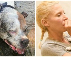 Stranger Gives Mouth-To-Snout Resuscitation To Older Pit Bull Who Nearly Drowned