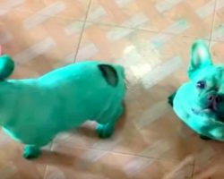 Nosy Dogs Stumble Upon Food Coloring During Midnight Kitchen Raid, Get Dyed Green