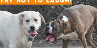 Get Ready To Laugh Out Loud! – Best FUNNY DOG Video Compilation