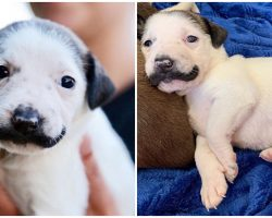 Rescue Puppy Born With A Charming Mustache Is Seeking A Loving Forever Home