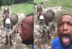 Donkey Hilariously Joins His Human In Singing 'Lion King' Song