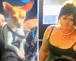 Man Suffers Seizure In Store & Dies, Woman Proceeds To Steal His Dog & Walk Away