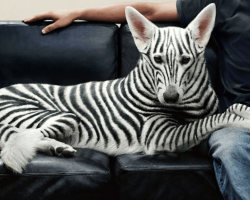 10 Most Expensive Dogs You Won't Believe Exist