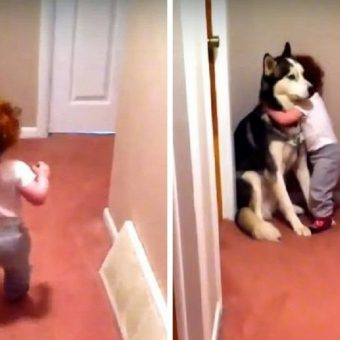 Baby Scared Of Vacuum Runs To Dog For Protection