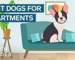 Best Dog Breeds For Apartment Living