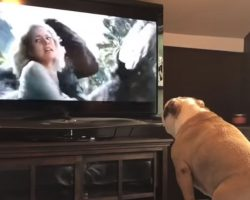 Bulldog Has Incredible Reaction To Actress In Trouble