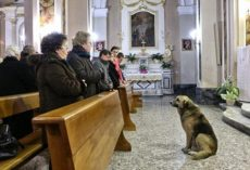 The Story Of This Dog Attending Church Every Day On His Own And The Reason Why Is Simply Amazing