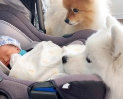 Dogs Meet Their Human Baby Sister For The Very First Time