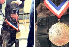 Four Military K-9s Receive K-9 Medal Of Courage, The Highest Honor For Military Dogs