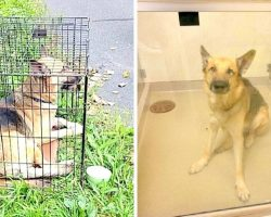 Dog Found Abandoned In Crate In Scorching Hot Sun Left To Die Without Food Or Water