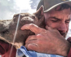 Man And His Dog Changed Each Other's Entire Lives And Worlds