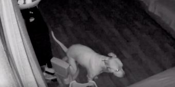 Security Camera Footage Reveals Dog Using Training Potty In Middle Of Night