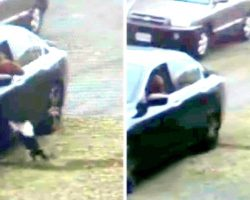 Dog Doesn't Realize He's Abandoned, Thinks His Owner Forgot Him By Mistake & Chases After Car