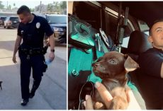 'Pint-Sized' Pup Joined Police Department After 2 Officers Saved Him While On Patrol