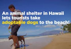 You Can Take A Shelter Dog For A Day Of Fun To Maui's Gorgeous Beaches