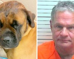 Doctor Hits Gentle Dog With Hammer & Shoots Him, Claims It Was In Self-Defense