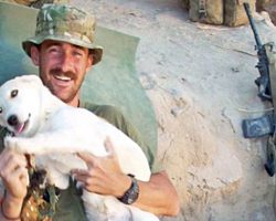 Marine Spots Puppy In Middle Of Afghanistan War Zone & Sneaks Him Back Home