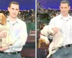 "Dad Brings Beagle On The David Letterman Show And Asked Him To ""Play Dead"""