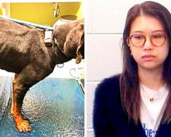 Student Locks Dog In A Cage & Starves Him For Months Despite Repeated Warnings