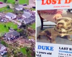 Family Looks For Dog Missing For 4 Months, Was Lost During Devastating Tornado