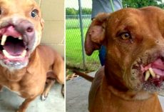 Family Dumped Their 'Ugly' Dog And Doctors Transformed Him With Life-Altering Surgery