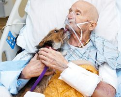 Dying Vietnam Veteran In Hospice Care Says Final Goodbye To His Beloved Dog