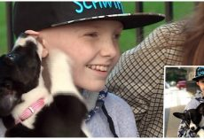 Boy Battling Cancer Who Admired Dogs During Chemo Finally Gets One Of His Own