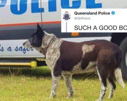 Toddler Goes Missing For 16 Hours, But Her Deaf And Blind Senior Dog Saves Her Life