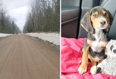 Puppy Dumped To Die In Cold Ditch On Lonely Road, Rescue Leads To A Dark Story