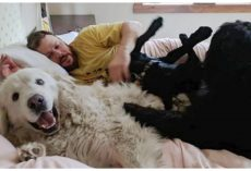 10 Dogs Who Are Total Bed Hogs And Aren't One Bit Sorry