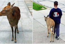 10-Year-Old Boy Helps A Blind Deer Find Food Every Day Before School