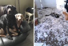 15 Photos Which Prove That Two Pets Are Always Better Than One
