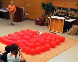 Dog Sets Guinness World Record For Fastest Time To Pop 100 Balloons By A Dog
