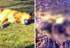 Abuser Hits Puppy In The Head & Kills Him, Dumps Him On Field In A Bloody Crate