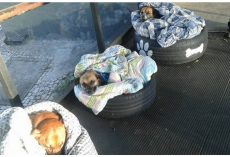 Bus Station Gives 3 Freezing Strays Shelter– And The Dogs Get Cozy In The Blankets