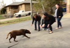 Chocolate Labrador Who'd Been Missing For 5-Years Sees His Family Again